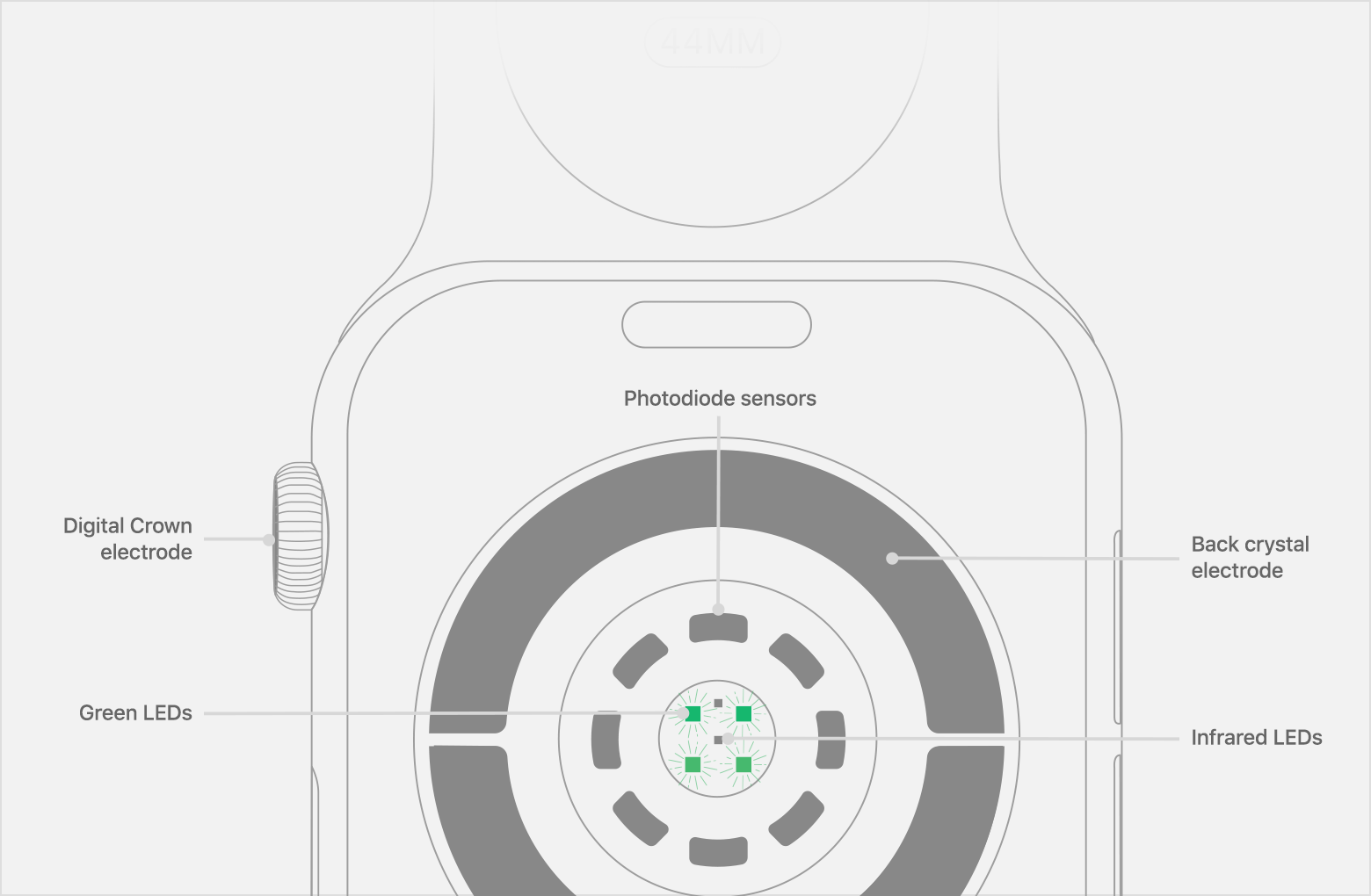 Location of Photodiode sensors, Infrared LEDs, and Green LEDs on Apple Watch Series 4.
